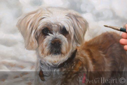 Dog portrait in progress Viruta