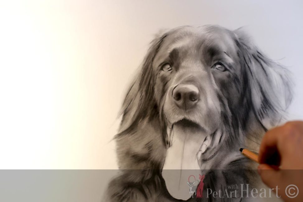 Zorba dog pastel portrait sketching stage