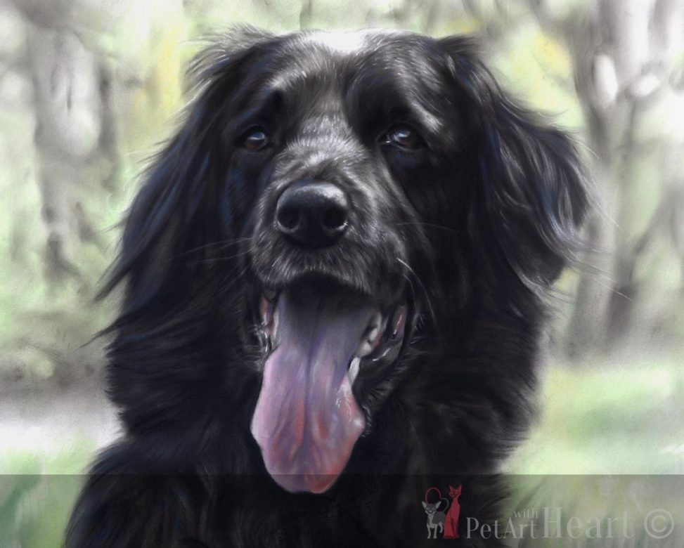 Dog portrait in pastel Zorba