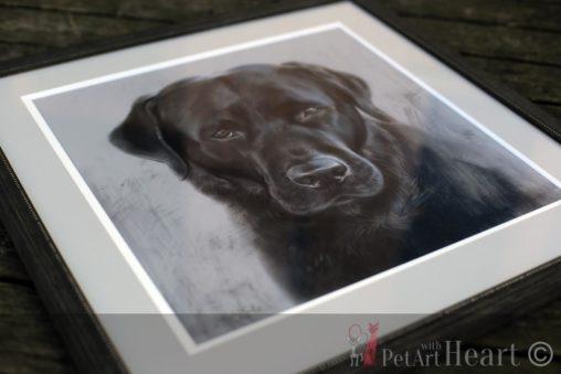 Framed pet portrait labrador klas