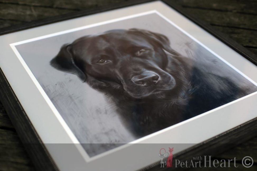 Framed pet portrait labrador klas
