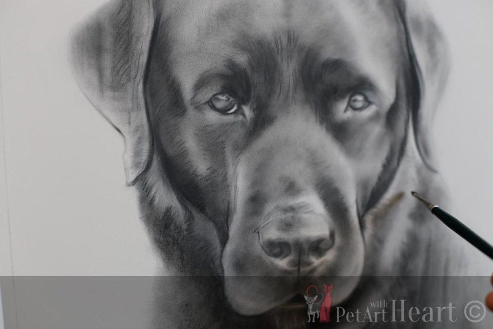 Labrador pastel portrait progress klas