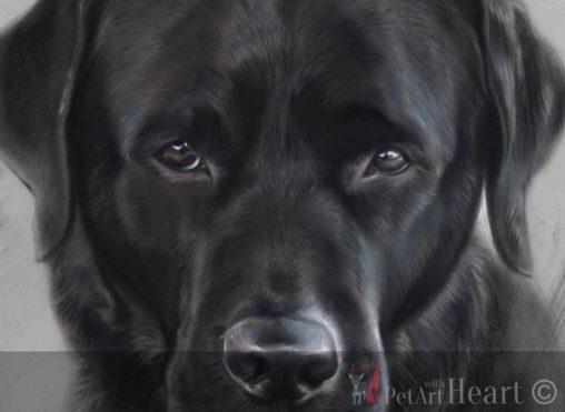 pet portrait labrador Klas pastel