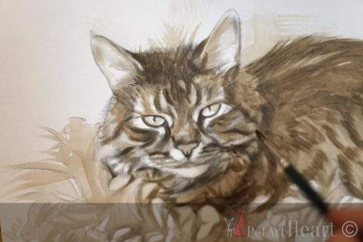 Initial sketch cat Tigerlily oils