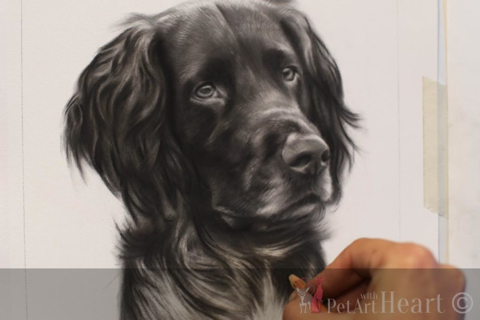 Dog portrait progress face