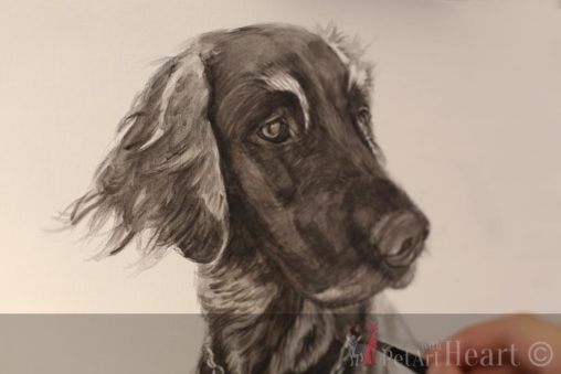 dog Laddie in oil initial sketch
