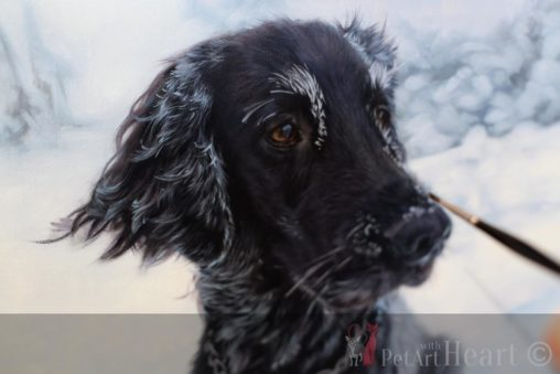 oil portrait progress flat coated retriever laddie