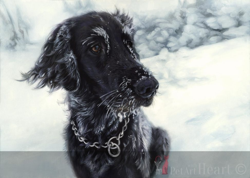 oil portrait flat coated retriever laddie