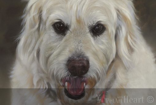 Dog portrait in oil oliver