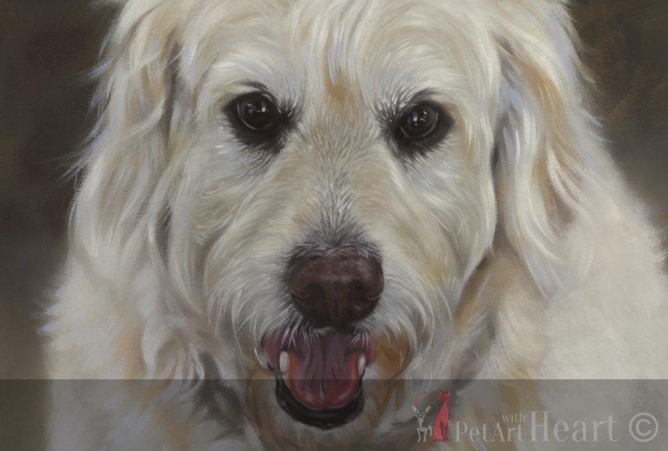 Dog portrait in oil oliver