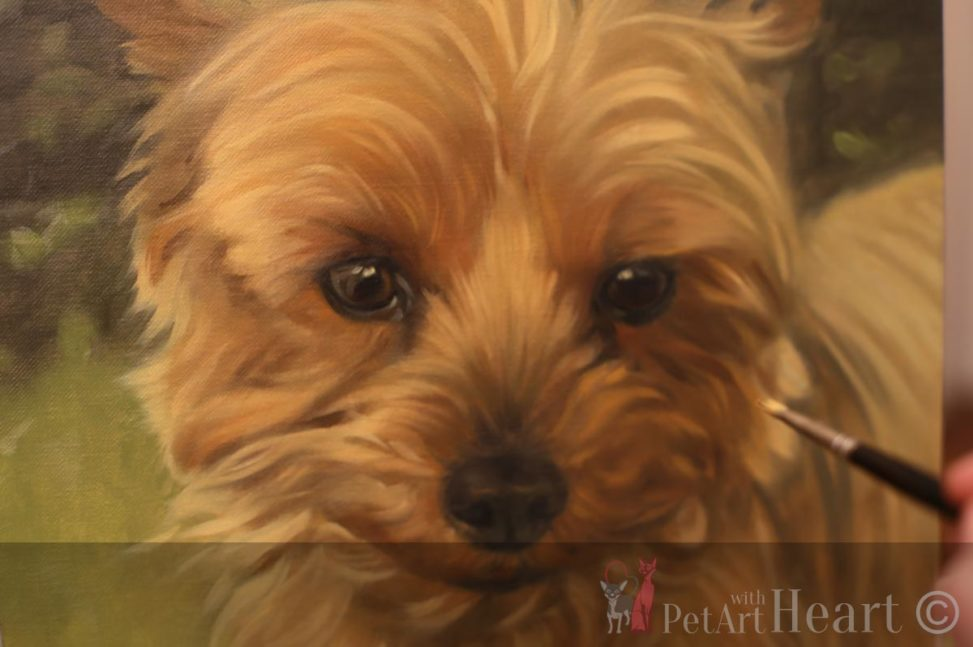 terrier oil portrait progress Ferguson
