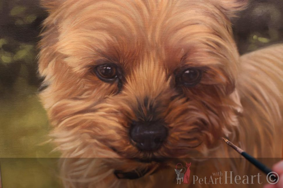 terrier dog portrait oil progress