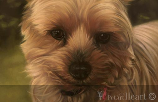 oil portrait yorkshire terrier