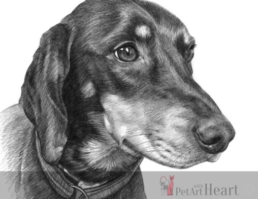 dog slovensky kopov pencil sketch
