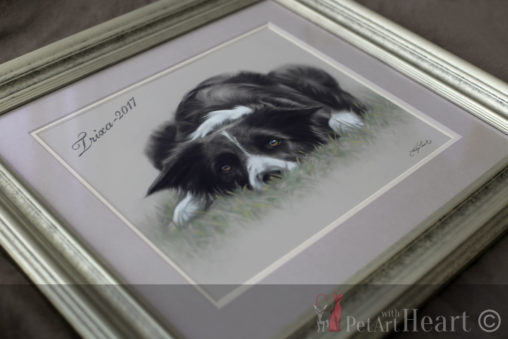 framed dog portrait border colle