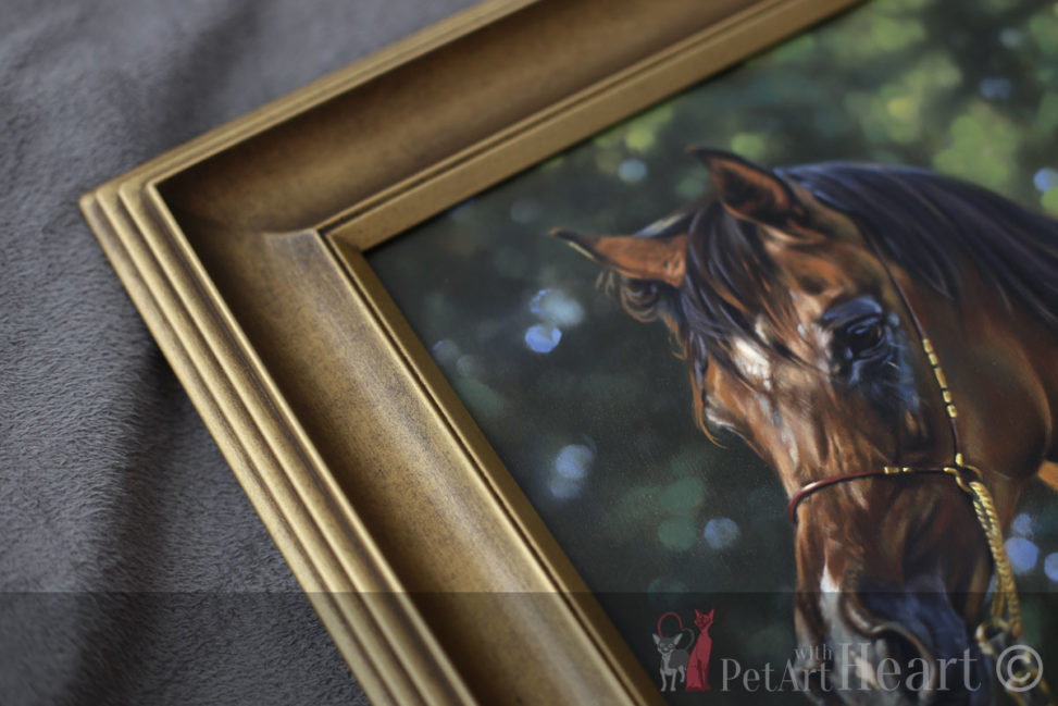 framed arab horse portraits
