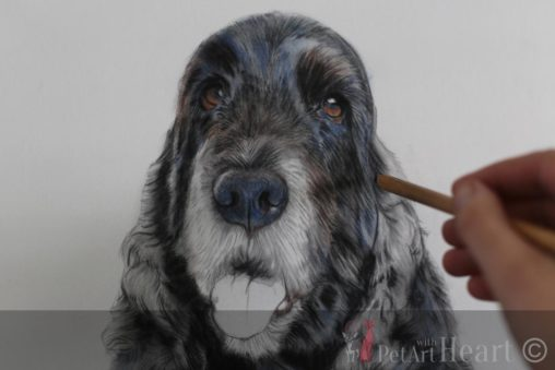 Cocker spaniel pastel detailed