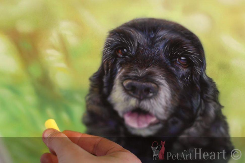 dog portrait pastel cocker spaniel progress