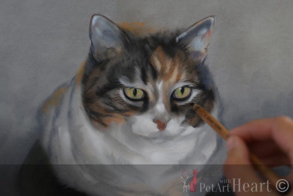 cat portrait in pastel mysan