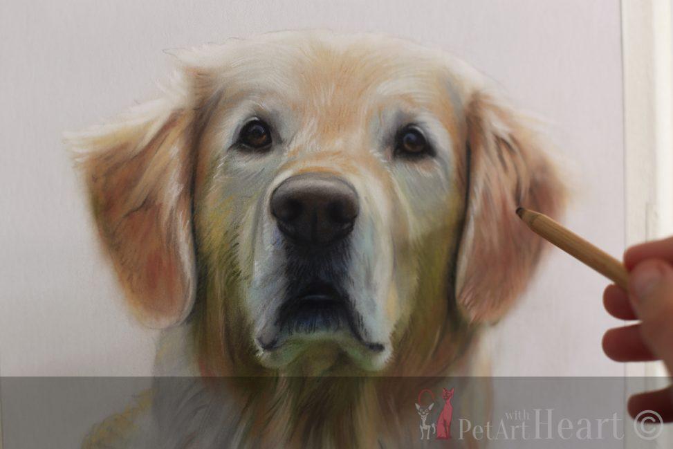 dog portrait pastel golden retriever progress