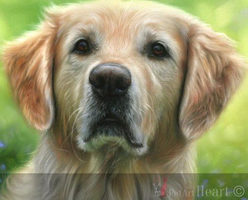 pastel pet portrait golden retriever