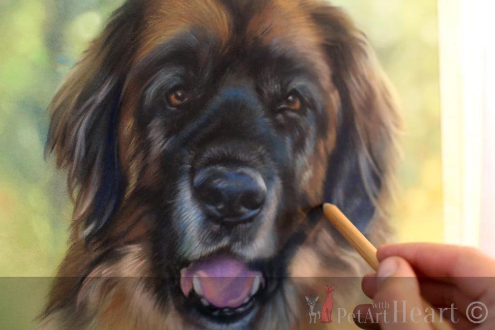 pet portrait pastel leonberger