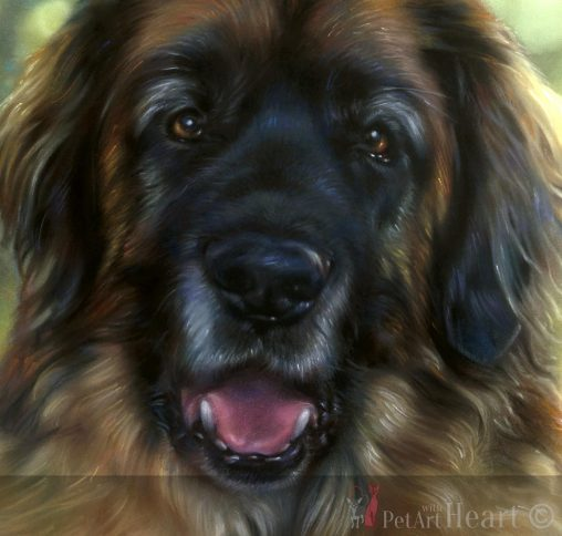 leonberger pastel pet portrait