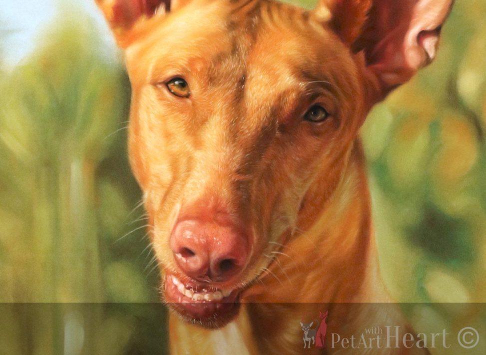 pastel pet portrait pharaoh hound