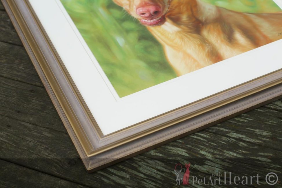 framed pet portrait pharaoh hound