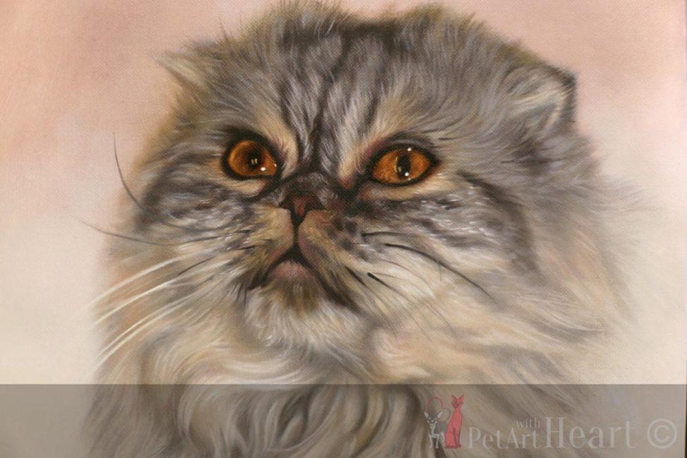 pet portrait scottish fold cat oil