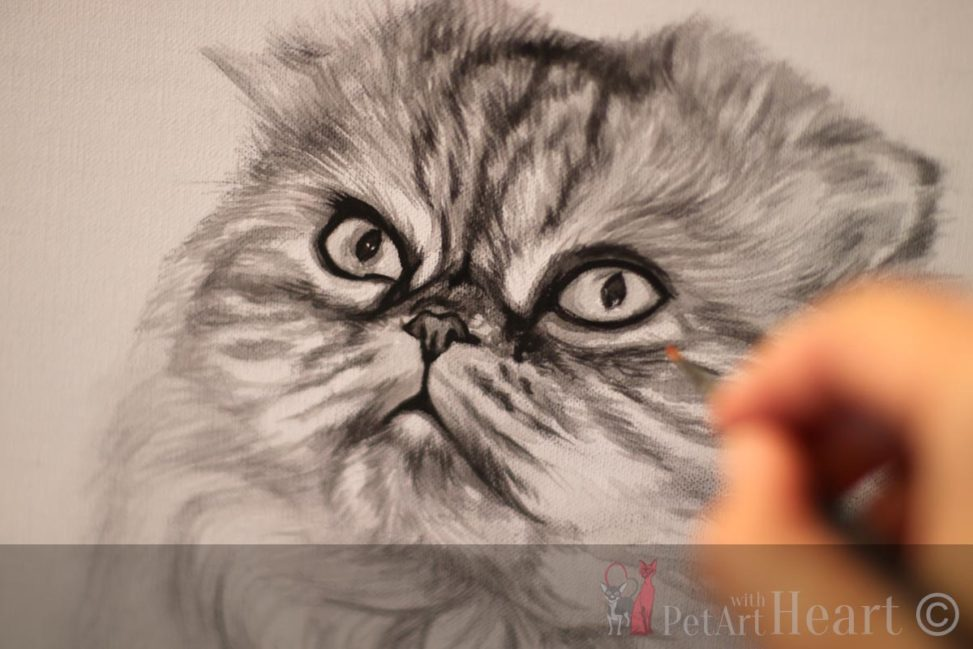 scottish fold cat oil painting progress