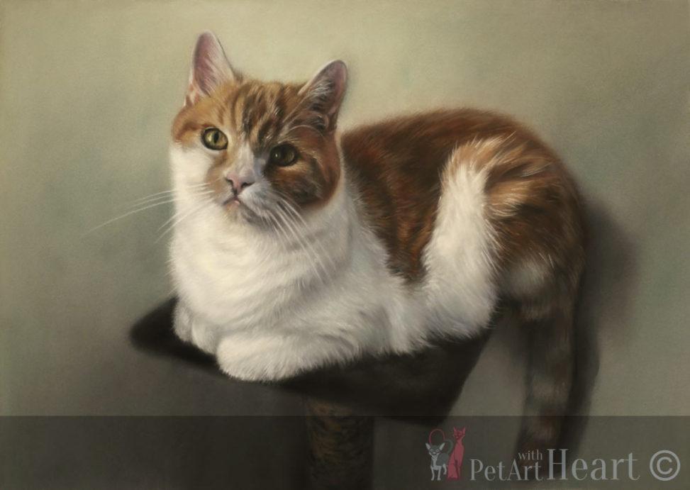 cat portrait pastel
