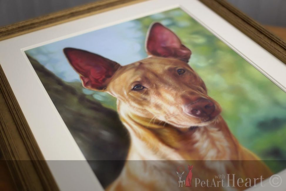framed pastel dog portrait pharaoh hound