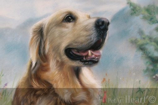 Dog Portrait Conté Pastel Golden Retriever