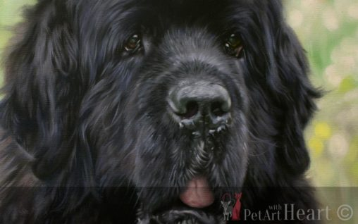newfoundland dog pet portrait