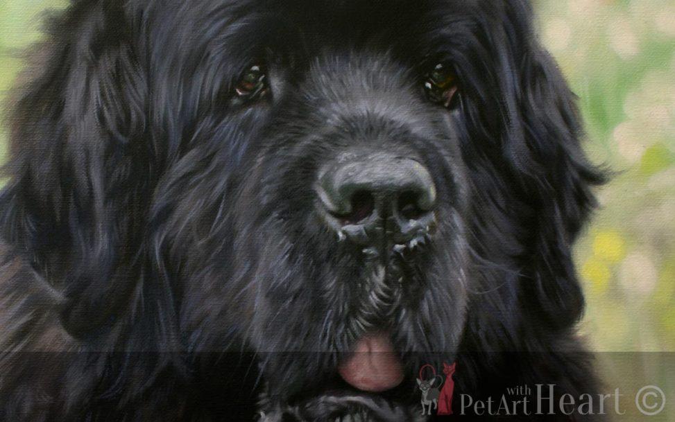 newfoundland dog pet portrait