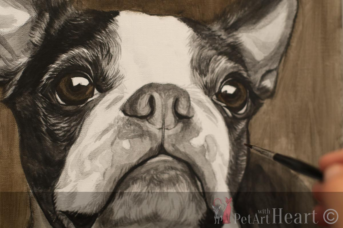 boston terrier portrait in oils