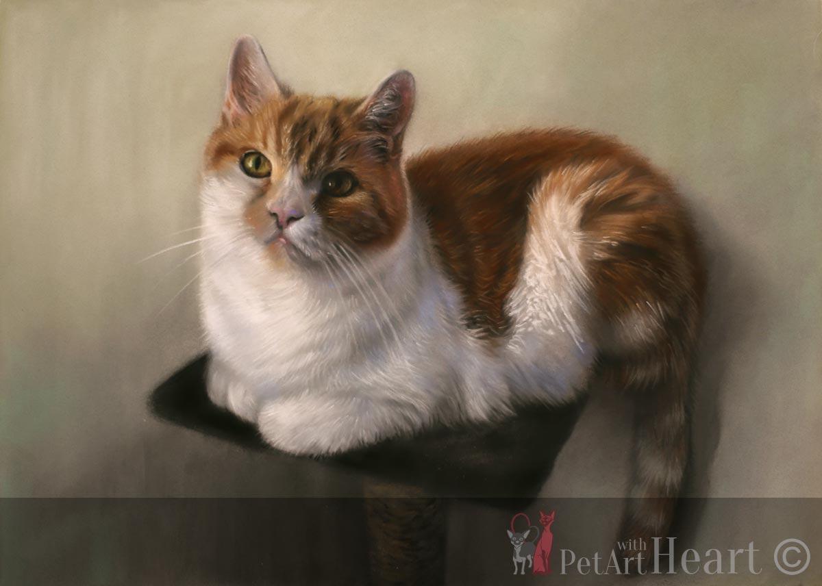 cat pastel portrait