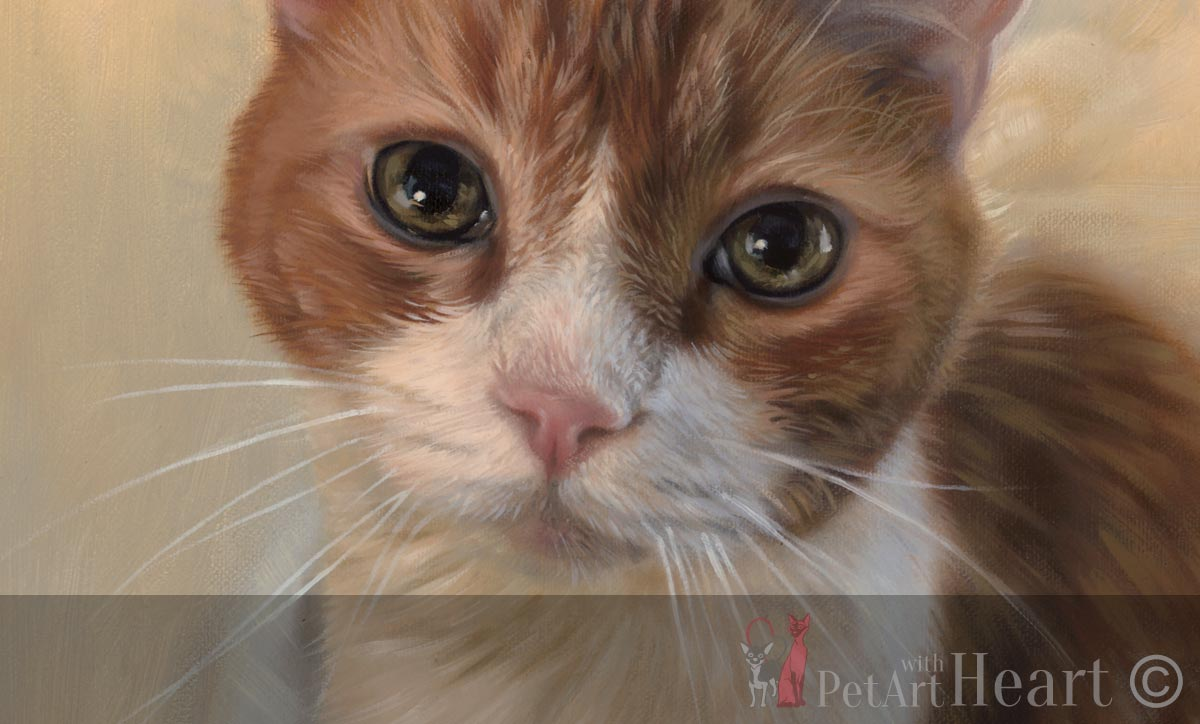 cat pet portrait in oils