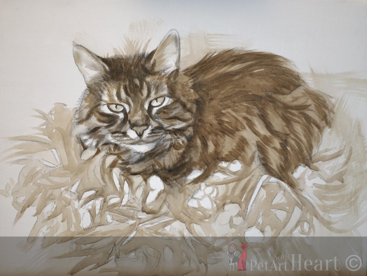 Sketch cat oils on canvas