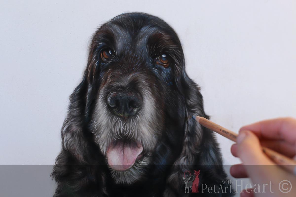 Cocker Spaniel Detailed Pastel Portrait