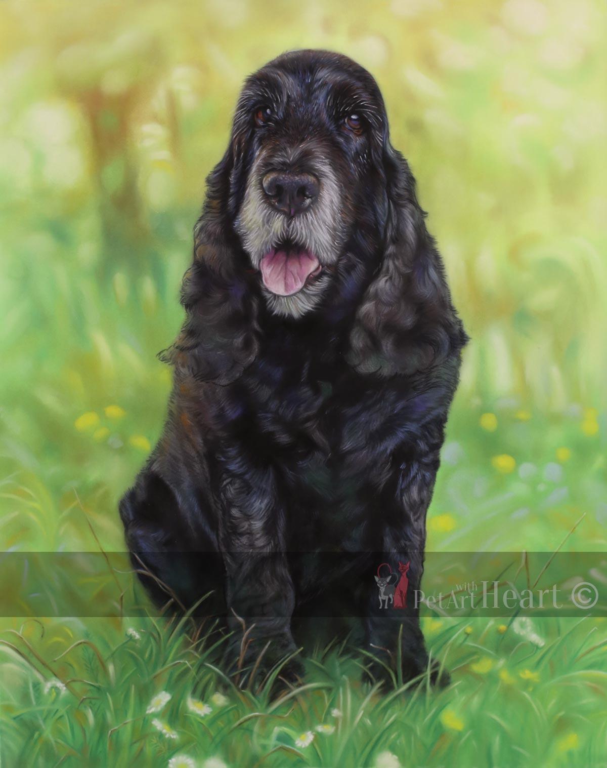 cocker spaniel pastel portrait