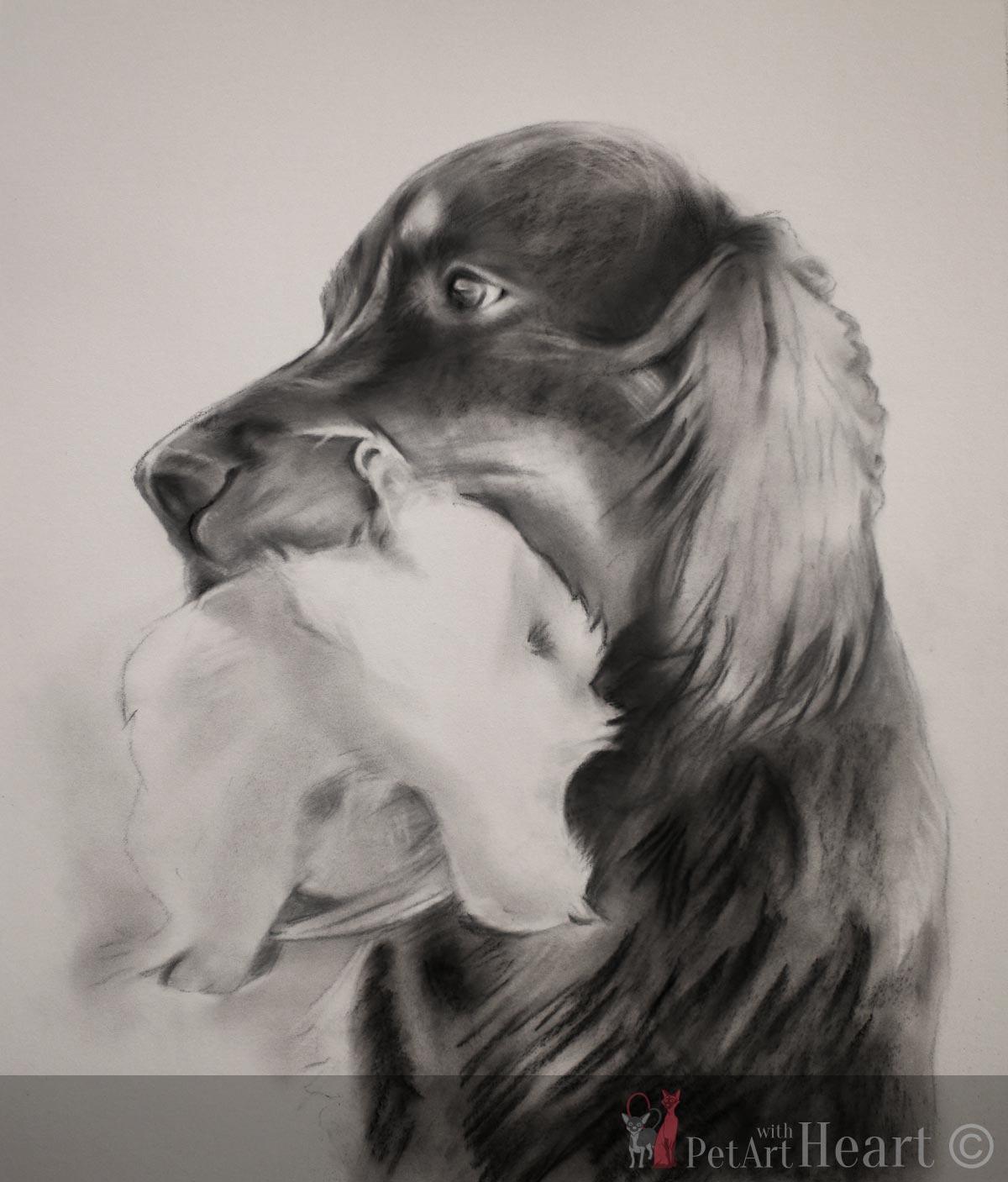 gordon setter pastel portrait progress