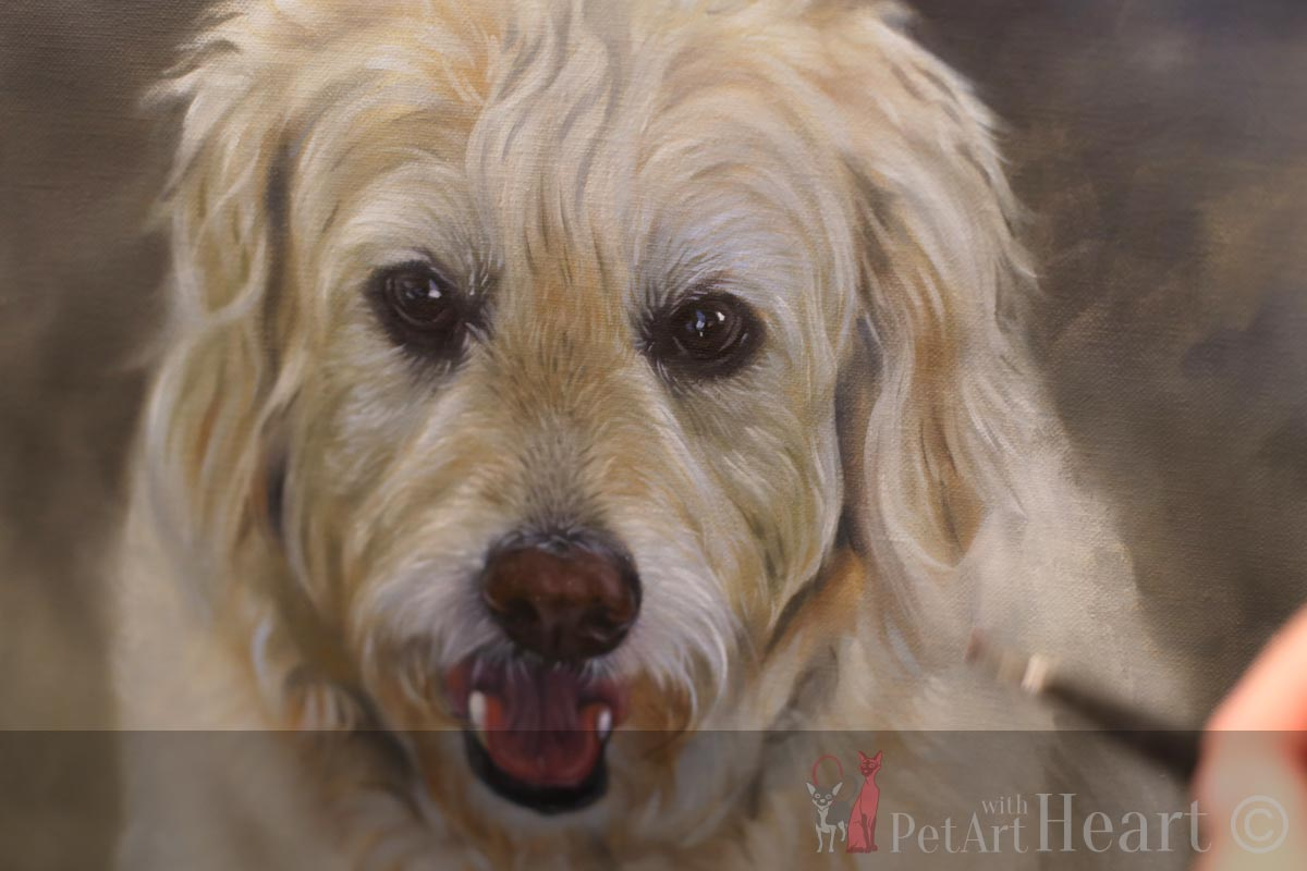dog portrait oil progress oliver