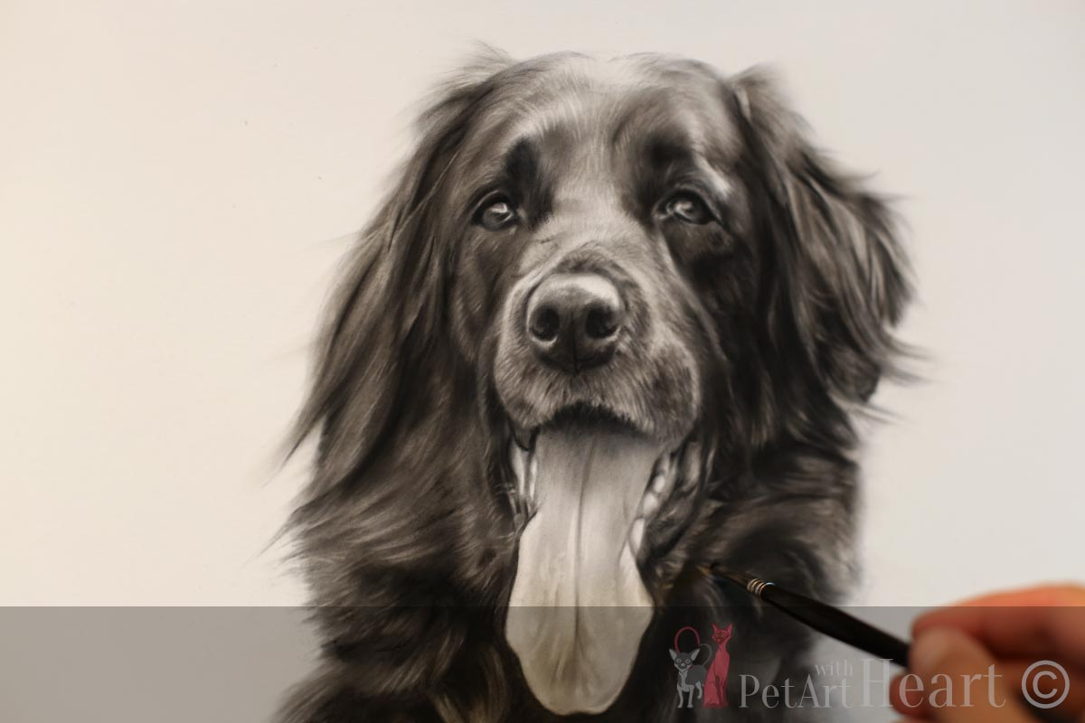 Dog portrait of Zorba next progress stage