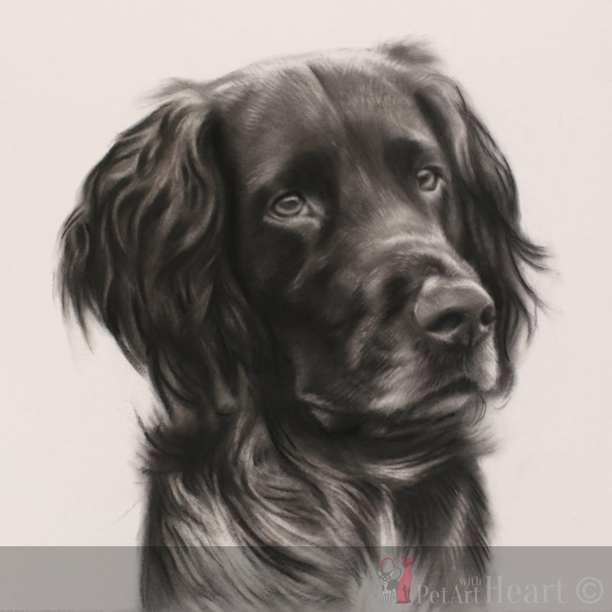 Second stage of dog Faxe in Pastel