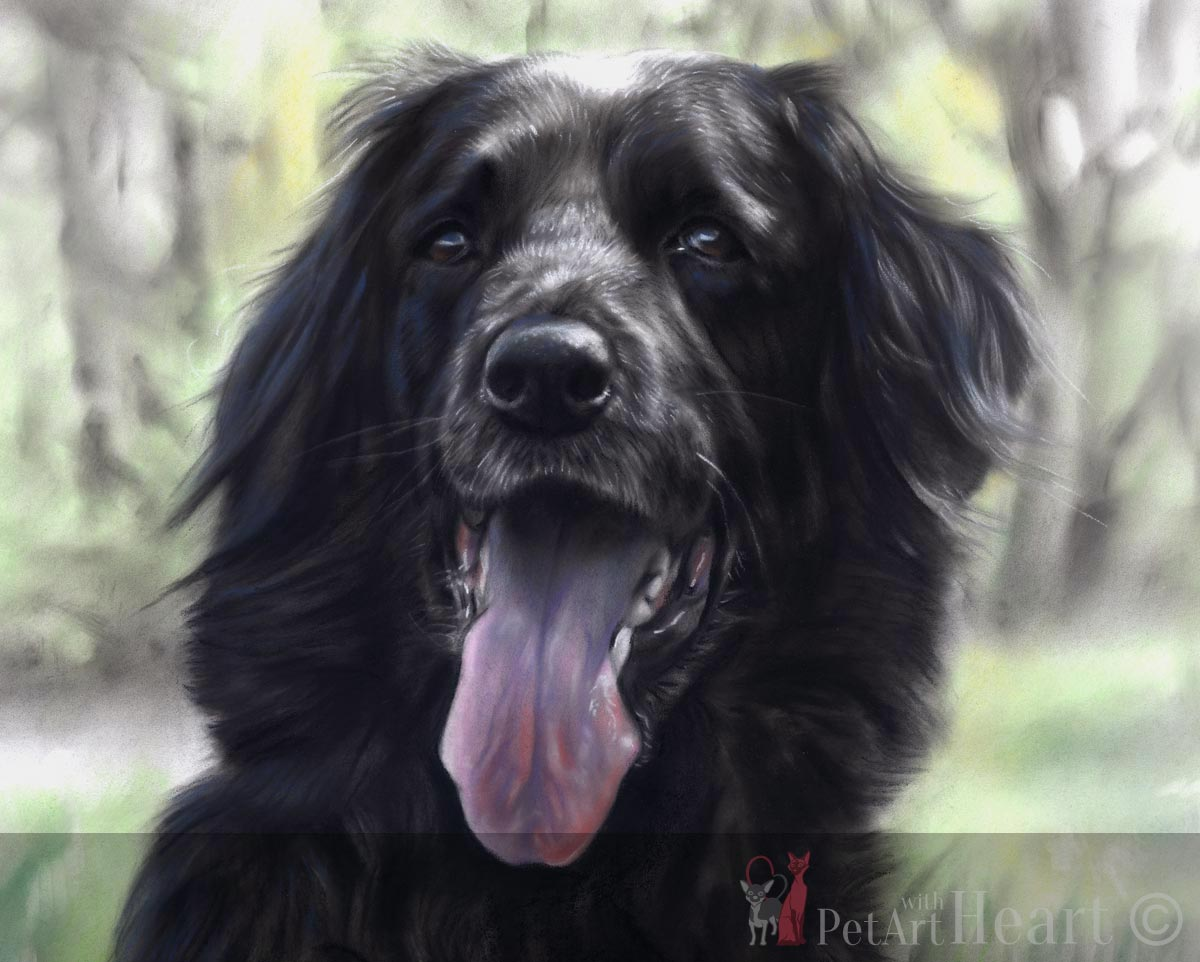 Dog Portrait in pastel Zorba Final scan