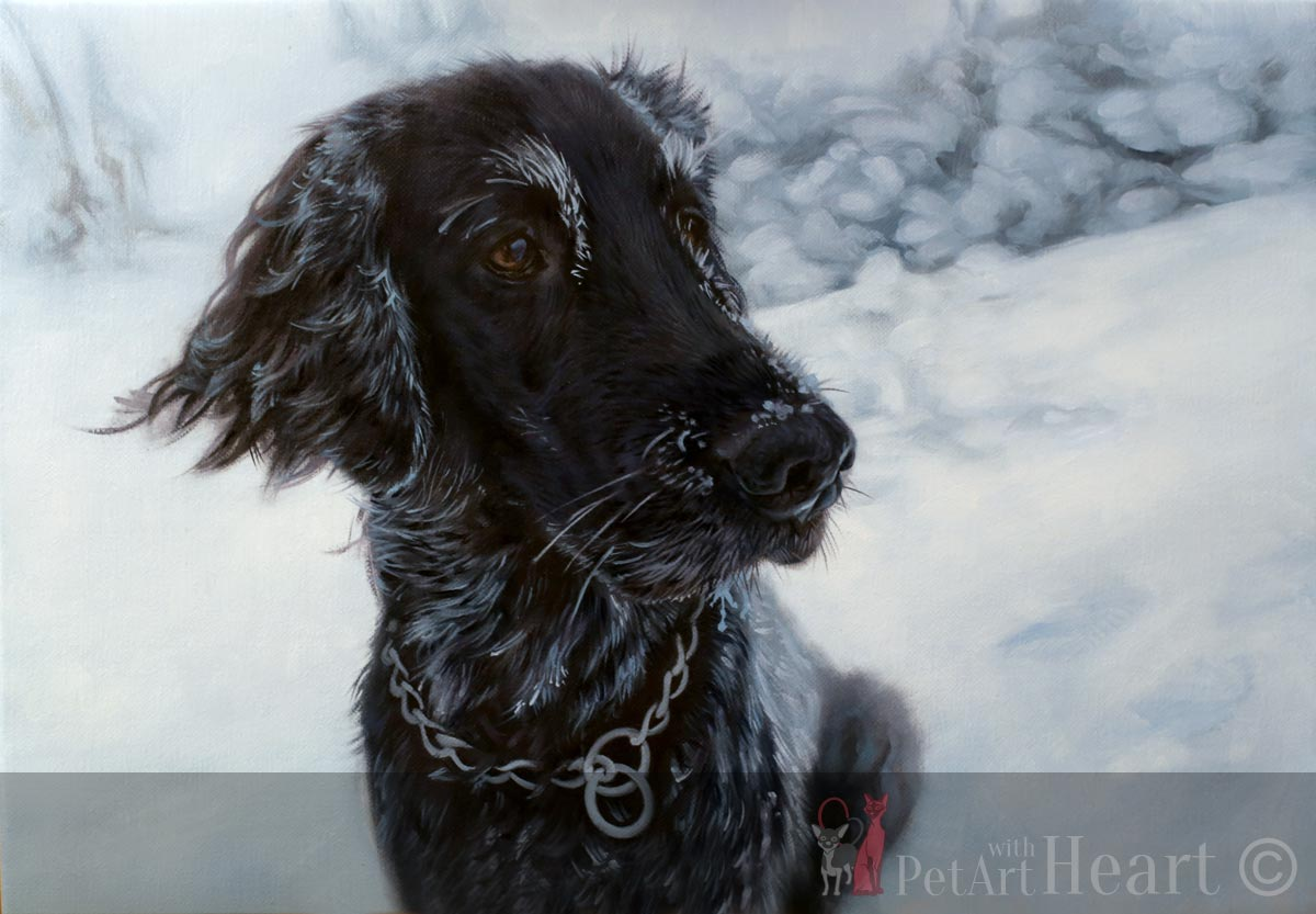flat coated retriever oil portrait progress