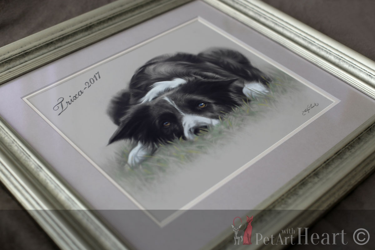 framed border collie portrait