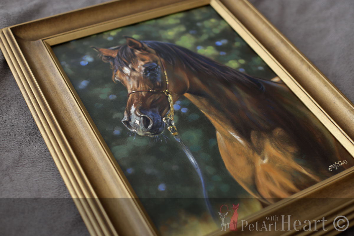 framed arabic horse portrait